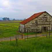 Old Barn In The Mustard Fields Poster