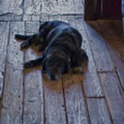Old Dog Old Floor Poster