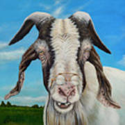 Old Goat - Painting By Cindy Chinn Poster