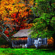 Old Homestead And The Apple Tree Poster