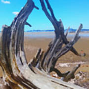 Old Log On Auckland Beach Poster