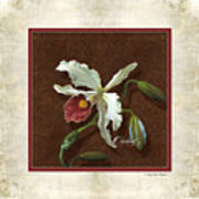 Old Masters Reimagined - Cattleya Orchid Poster