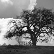 Old Oak Against Cloudy Sky Poster