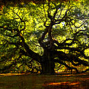 Old Old Angel Oak In Charleston Poster