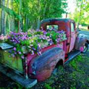 Old Pickup Truck As Flower Bed Poster