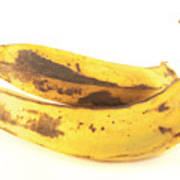 Old Plantain Poster