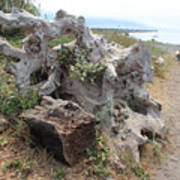 Old Stump At Gold Beach Oregon 5 Poster