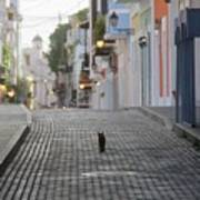 Old Town Alley Cat Poster