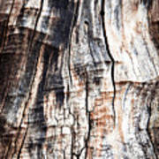 Old Tree Stump Tree Without Bark Poster