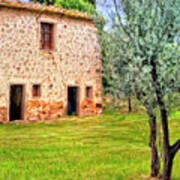 Old Villa And Olive Trees Poster