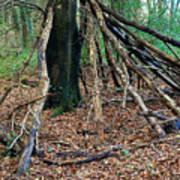 Old Woodland Hide. Poster