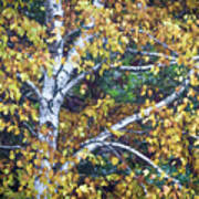 Old Yellow Birch Poster