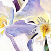 Oleander By Irina Sztukowski Poster