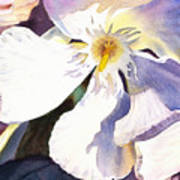 Oleander Close Up  Poster