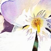 Oleander Flower By Irina Sztukowski Poster