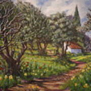 Olive Grove In Spring-time Poster