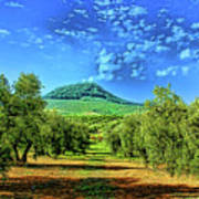 Olive Grove Spain Poster
