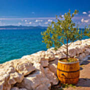 Olive Tree In Barrel By The Sea Poster