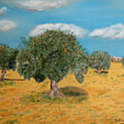 Olive Trees In Summer Poster