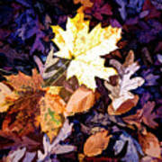 On The Forest Floor Vivid Colors Poster