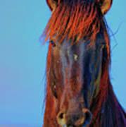 Onaqui Wild Stallion Portrait Poster