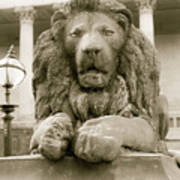 One Of Four Lion Statues Outside St George's Hall Liverpool Poster