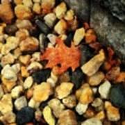 One Orange Leaf Poster