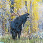 One Proud Bull Moose Poster