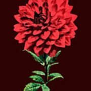 One Red Dahlia Poster