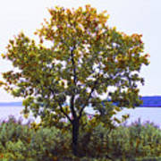 One Tree Hudson River View Poster