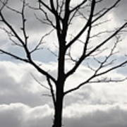 One Winter Tree With Clouds Poster