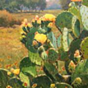 Opuntia In Bloom Poster