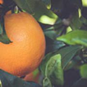 Orange #3 Poster