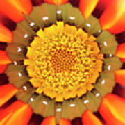 Orange African Daisy Poster