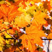 Fall Of Orange Leaves Poster