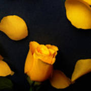 Orange Beauty 2 Poster