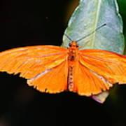 Orange Beauty Poster