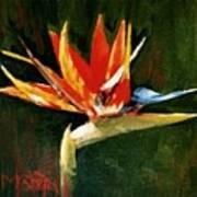 Orange Bird Of Paradise Poster