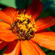 Orange Bloom Poster