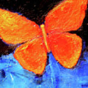 Orange Butterfly Poster