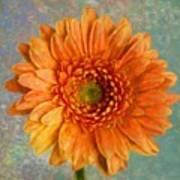 Orange Color Stroke Gerber Daisy Poster