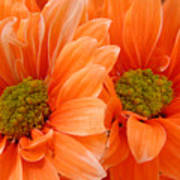 Orange Daisies Paired Poster
