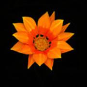 Orange Daisy Poster