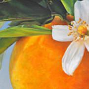 Orange En Fleurs Poster