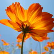 Orange Floral Summer Flower Art Print Daisy Type Blue Sky Baslee Troutman Poster