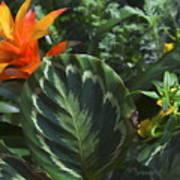 Orange Flower Longwood Gardens Poster