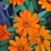 Orange Flowers Poster by Lori Kesten