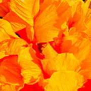 Orange Frills Poster