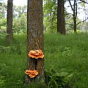 Orange Fungi On A Tree Poster
