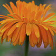 Orange Glow Poster